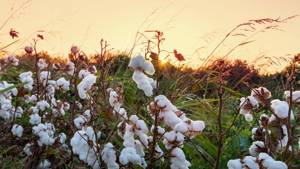 BCI: Moda sustentável através dos tecidos de algodão da Manatex
